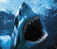 gigi hiu